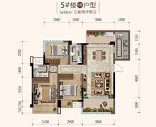 5#楼6#户型