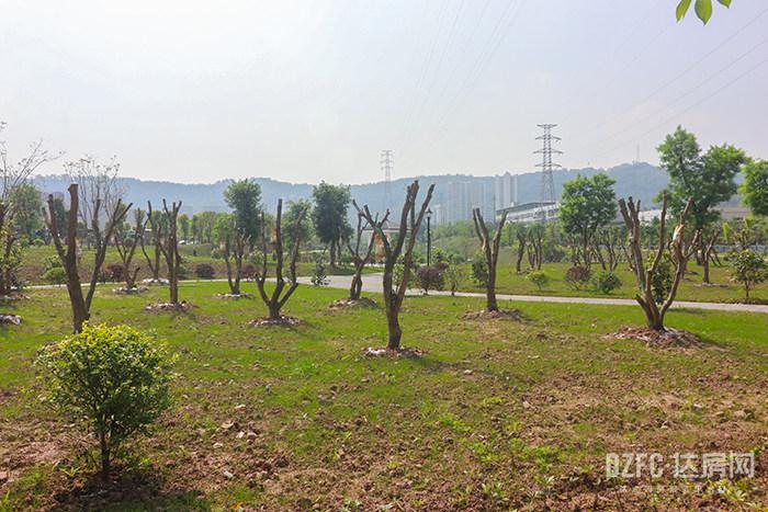 达州 达房网 杨柳公园 公园 城市建设 打卡地 南外 南城 杨柳垭
